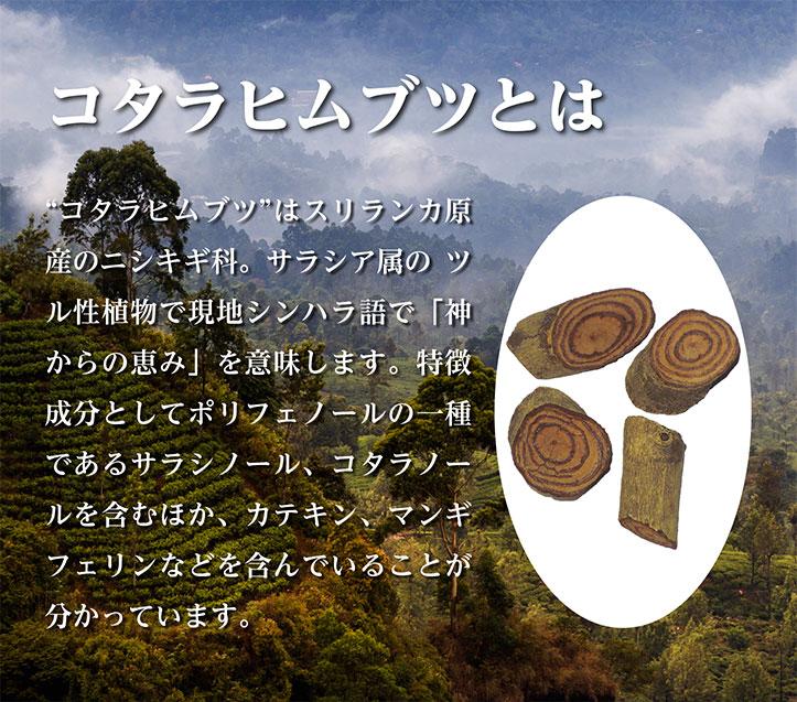 """コタラヒムブツとは """"コタラヒムブツ""""はスリランカ原産のニシキギ科。サラシア属の ツル性植物で現地シンハラ語で「神からの恵み」を意味します。特徴成分としてポリフェノールの一種であるサラシノール、コタラノールを含むほか、カテキン、マンギフェリンなどを含んでいることが分かっています。"""
